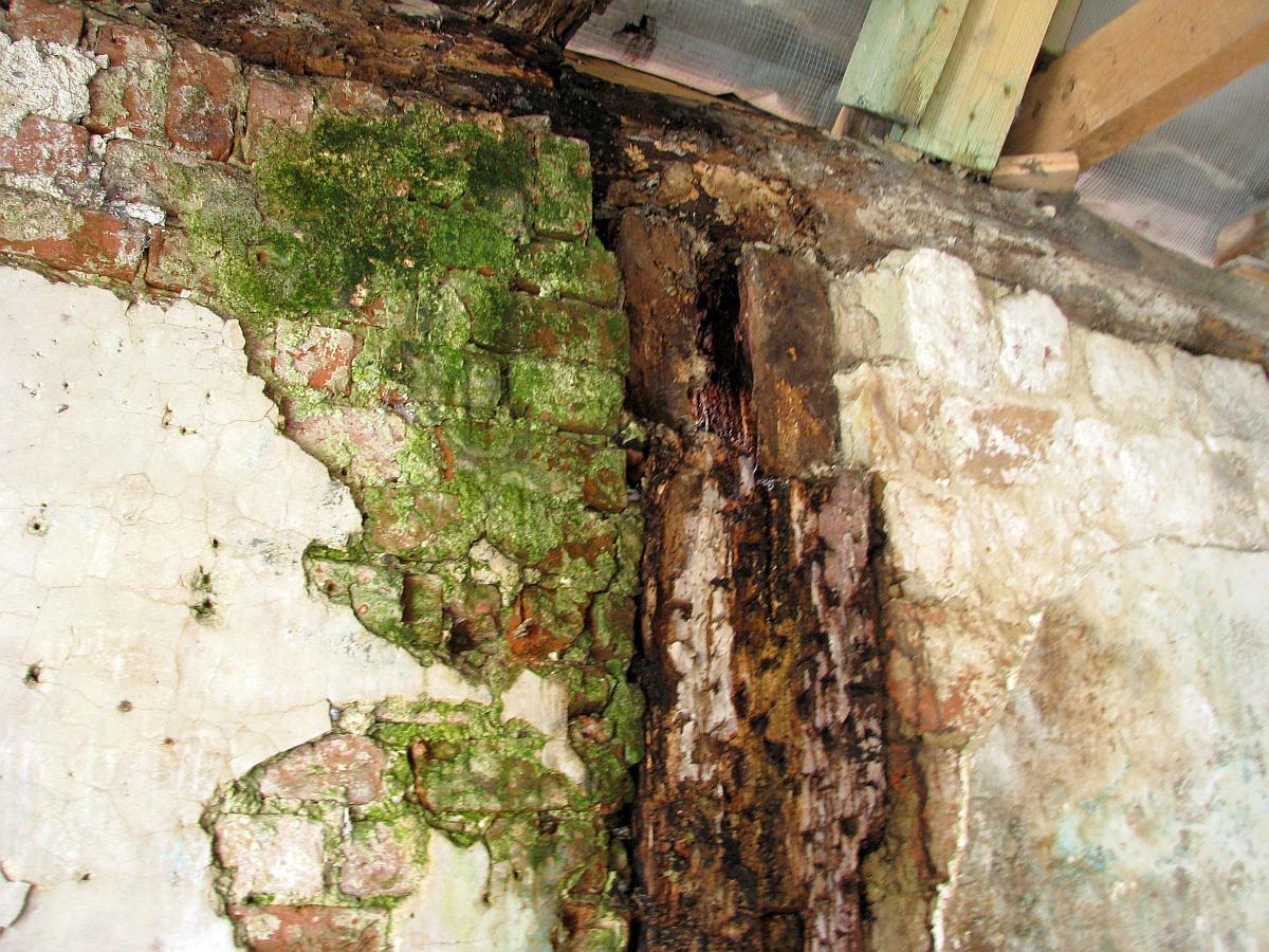 Das ist ein Fachwerkständer im Obergeschoss, der bereits sehr stark durch Pilzbefall abgebaut ist. Beim nächsten Balken über dem EG ist die Wandauflage durch den Gescheckten Nagekäfer komplett weggefressen (inkl. Pilzbefall).