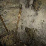 Kellerfund mit massivem Oberflächenmyzel