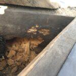 Schäden durch den Echten Hausschwamm und Gescheckten Nagekäfer